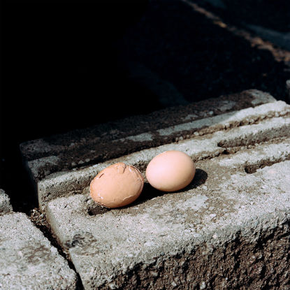 Picture of Found Eggs, June 2018