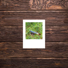 Picture of Painted Blue Stick - Small Print