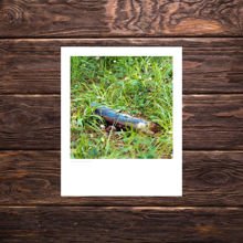 Picture of Painted Blue Stick - Everyday Print