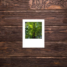 Picture of Green Leaves - Small Print