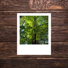 Picture of Green Leaves - Everyday Print