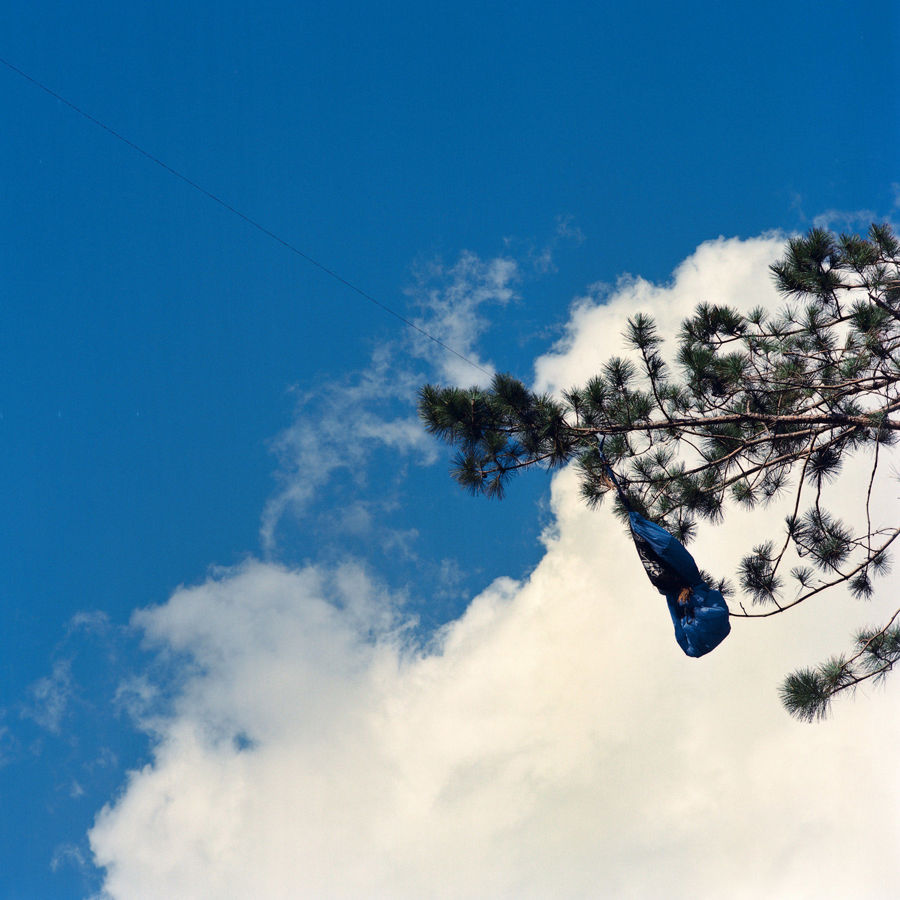 Picture of Blue Thing Stuck in a Tree, Duluth, Minnesota, July 2020