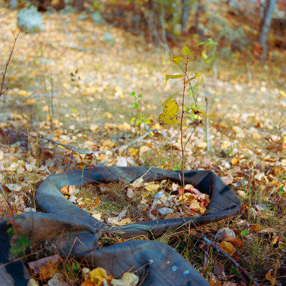 Picture of Inner Tubes With Plant, Duluth, Minnesota, October 2020