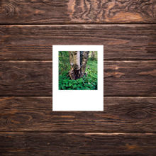 Picture of Torn Birch - Small Print