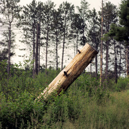 Picture of Stump, Duluth, Minnesota, July 2020