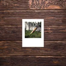Picture of Stump - Small Print
