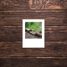 Picture of Footpath Cut Through a Log - Small Print