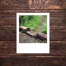 Picture of Footpath Cut Through a Log - Everyday Print