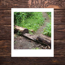 Picture of Footpath Cut Through a Log - Everyday Mayhem Edition